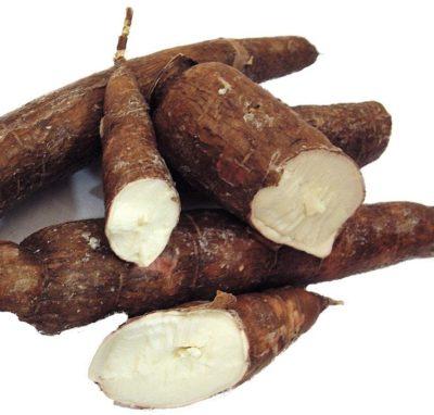 Per saperne di più: la manioca