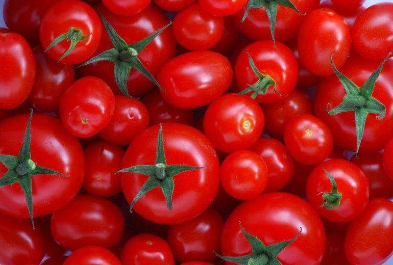 Per saperne di più: il pomodoro