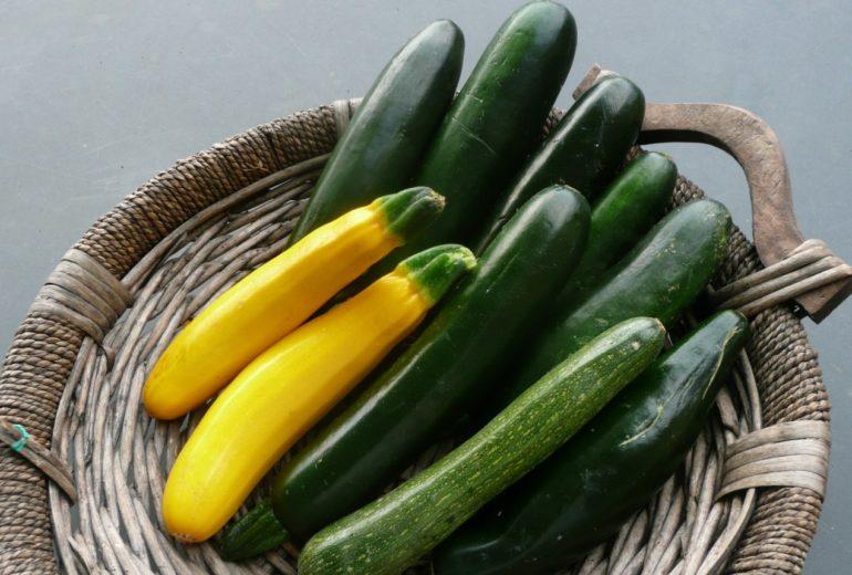 Per saperne di più: le zucchine