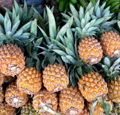 Per saperne di più: l'ananas