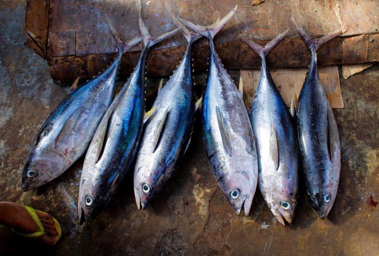 Per saperne di più: il tonno