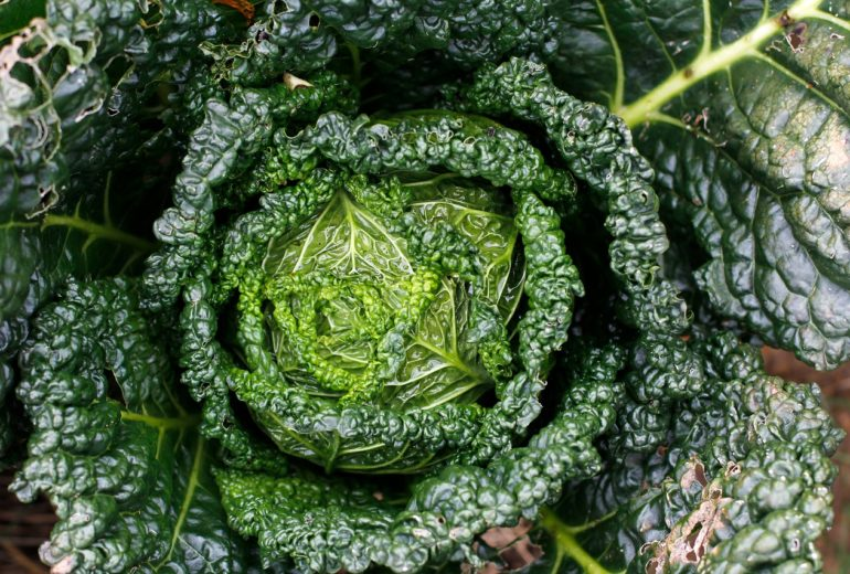Per saperne di più: il kale